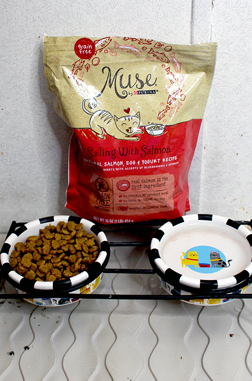 How to Integrate New Pets Food || Southeast by Midwest #ad #PurinaMysteries #CollectiveBias #Purina #Petsmart