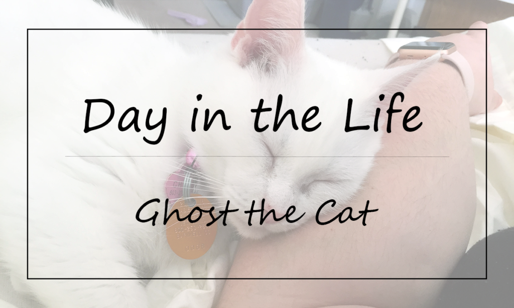 Day in the Life of Ghost Featured Image || Southeast by Midwest #ad #sponsored #FreeandCleanLiving #tidycats #collectivebias